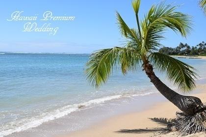椰子の木 5.jpg